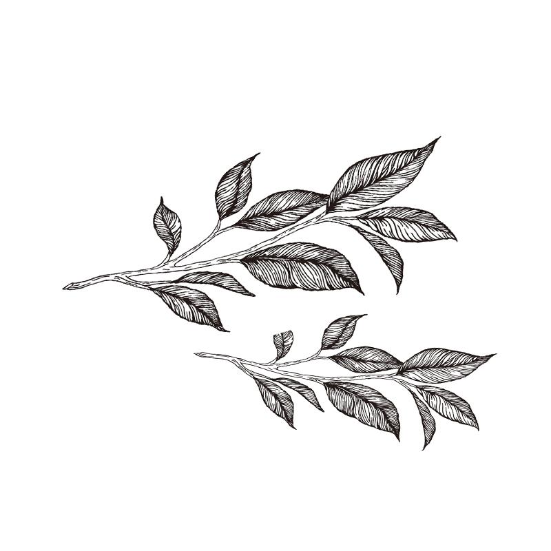 ロゴから取った茶葉